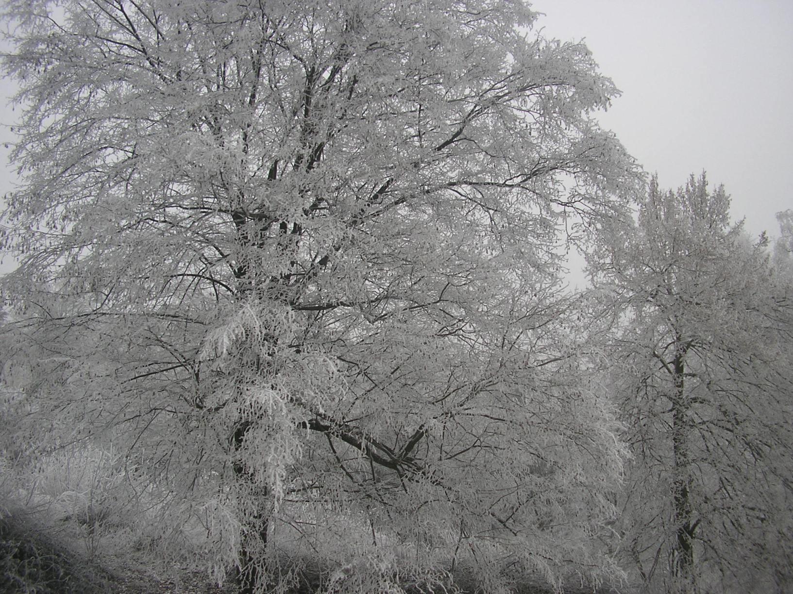 ice.jpg